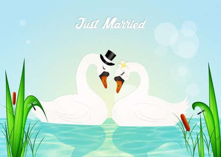 swans: Wedding of swans Stock Photo