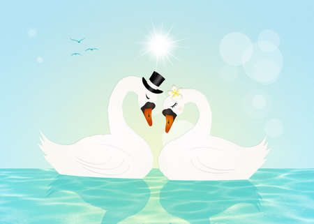 swans: Marriage of swans