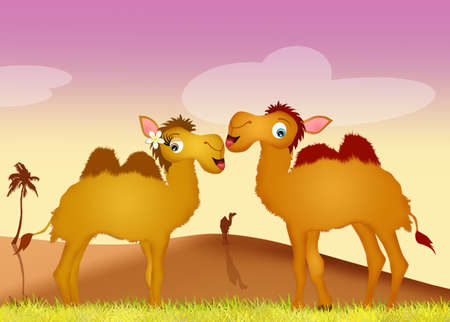 humps: camels in love Stock Photo