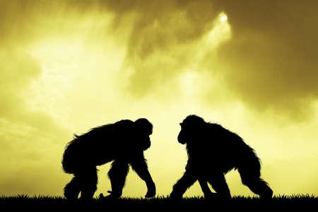 primeval: monkeys at sunset