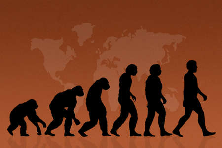 human evolution: illustration of human evolution, species