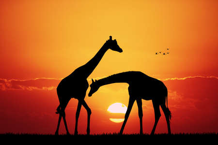 jirafa en paisaje africano al atardecer Foto de archivo