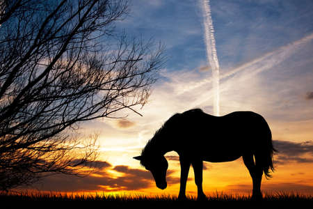 mountain sunset: horse grazing in the meadow