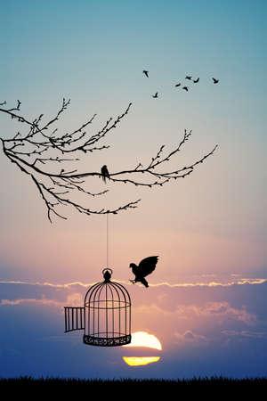 cage d'oiseau sur l'arbre