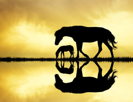 pet therapy: horses silhouette on river