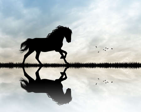 gallop: horse gallop at sunset Stock Photo