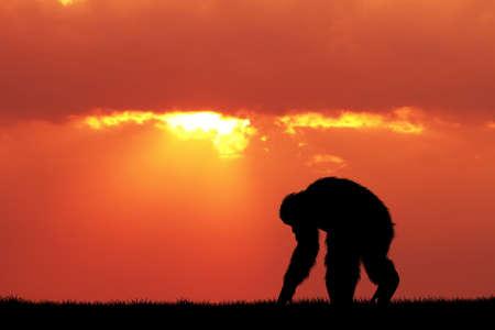 Chimpancés en la puesta del sol Foto de archivo - 63441392