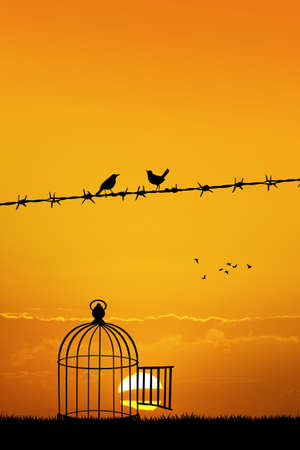 coupling: free birds on wire