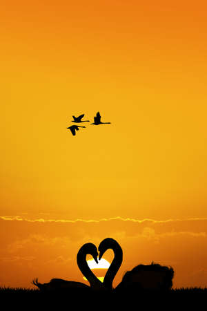 swans couple silhouette Stock Photo