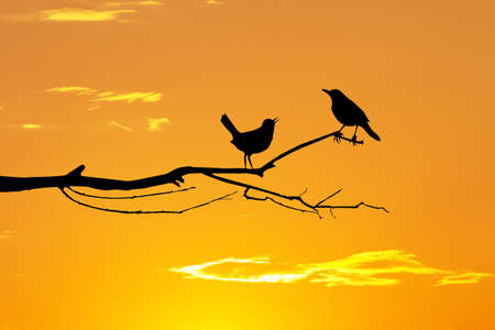 coupling: birds in love on branches