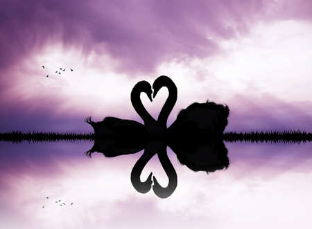 swans in love in the lake at sunset