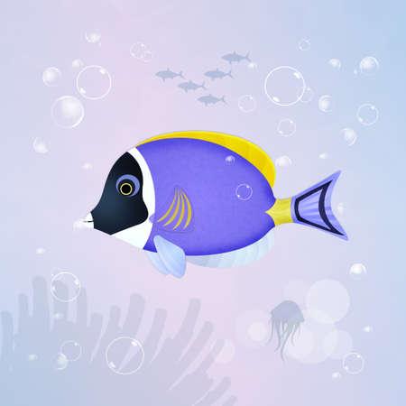 surgeonfish: surgeonfish in the aquarium