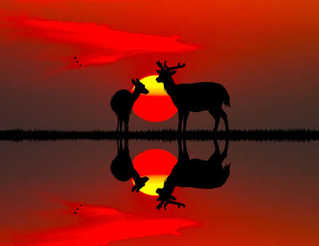 coupling: deer at sunset on river Stock Photo