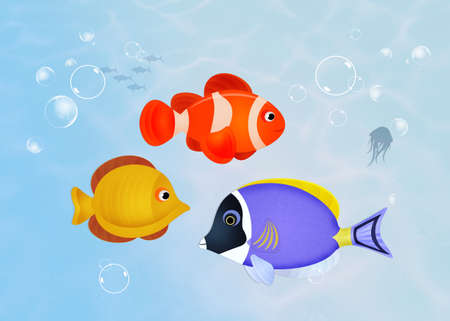 various fishes in the ocean