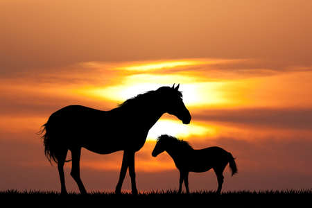 the mare at sunset Stock Photo