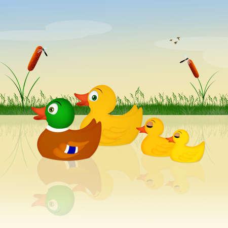 pollitos: familia de patos en el lago Foto de archivo