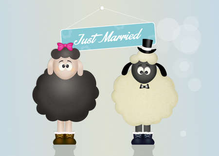 coupling: Wedding of sheeps