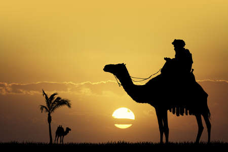 bedouin on camel at sunset Stock Photo