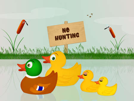 ducks happy for a ban on hunting