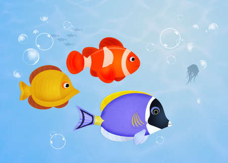 seabed: fish on the reef Stock Photo