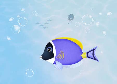 surgeonfish: surgeonfish in the ocean