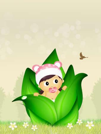 augury: baby female in the bud Stock Photo