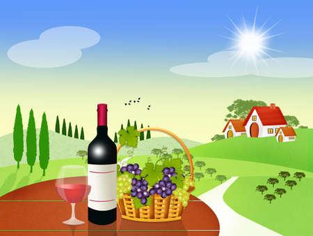 vineyards of black grapes Stock Photo