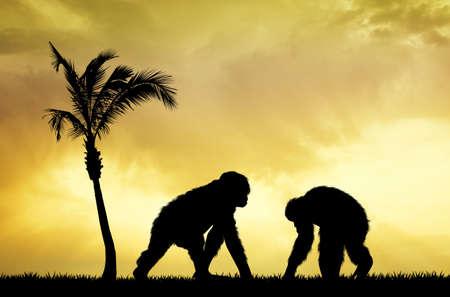 chimpances: Chimpancés en la puesta del sol Foto de archivo