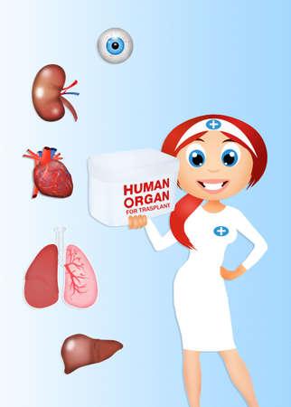 donacion de organos: Donante de órganos para trasplante