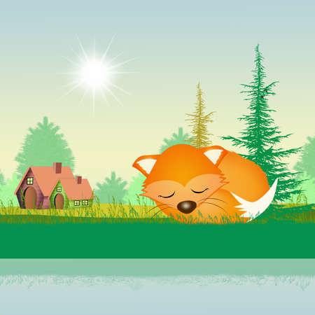 nap: red fox in summer