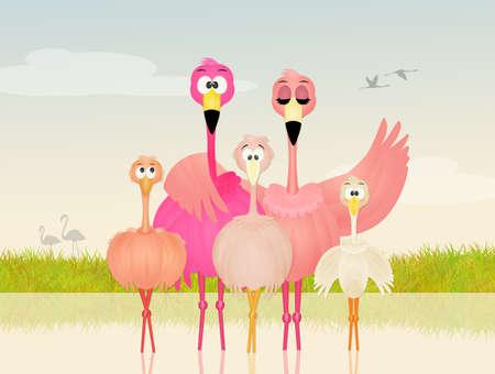 coupling: pink flamingos family