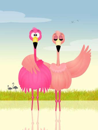 coupling: pink flamingos in love