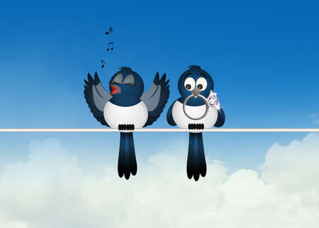 two magpies Stock Photo