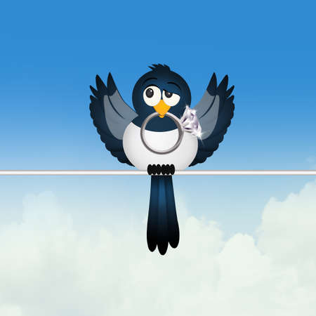 magpie: magpie with jewel