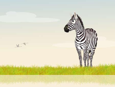 striated: zebra on river