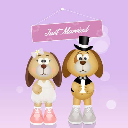 Wedding of dogs Stock Photo