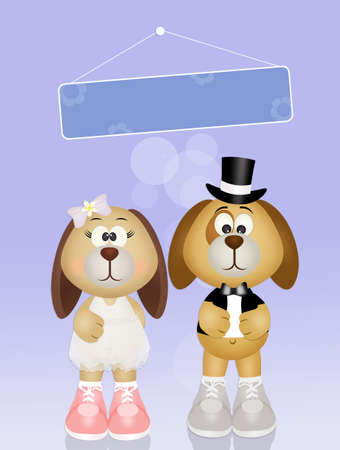 dogs bride and groom