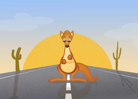 oasis: kangaroo on the road