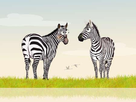 striated: zebras in the jungle