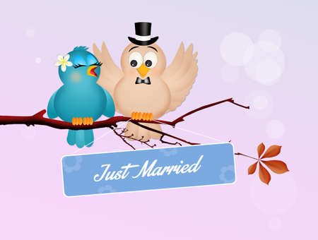 Wedding of birds