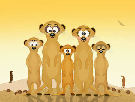 mongoose: family of meerkats Stock Photo