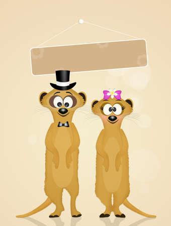 Wedding of meerkats Stock Photo