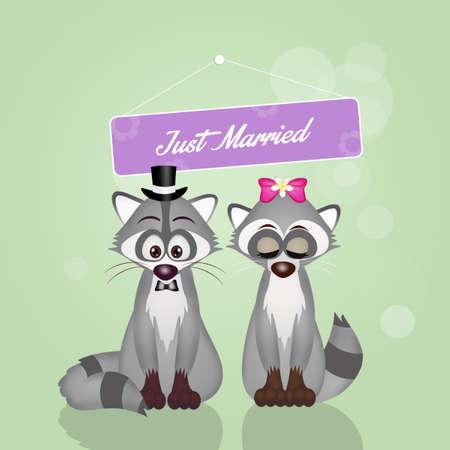 raccoons: Marriage of raccoons