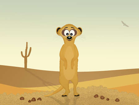 suricate: suricate in the desert