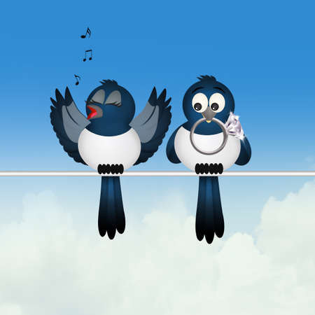 magpie couple on wire Stock Photo