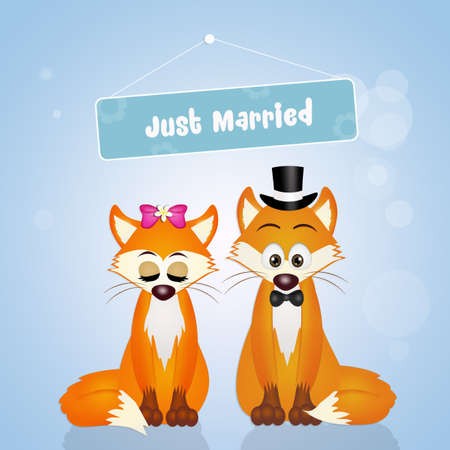 Wedding of foxes