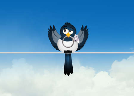 magpie on wire Stock Photo