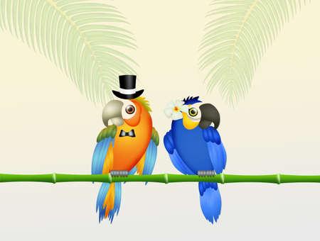 Parrot couple on wedding day Stock Photo