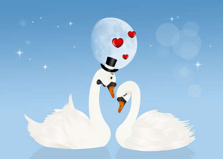 swans in love in the moonlight