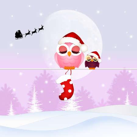 uil met Kerstmis